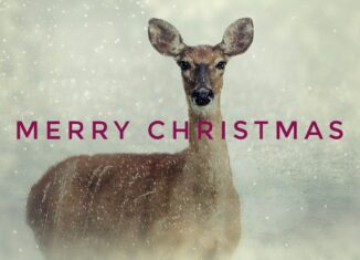 Merry Christmas Deer Photo