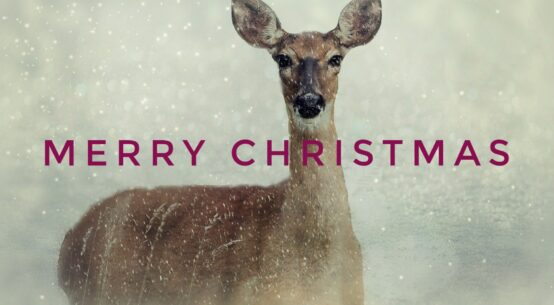 Merry Christmas Deer Photo